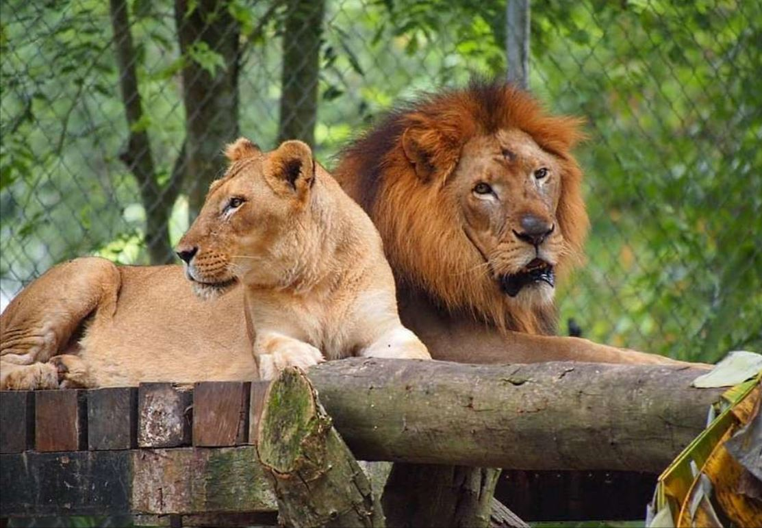 Malaysian Association Of Zoological Parks And Aquaria Seeks Public Donation To Sustain Zoos In The Country