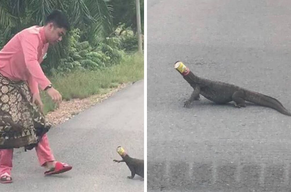 'I Was Scared But I Had To Help', Says Man Who Saved Lizard Whose Head Was Stuck In Can
