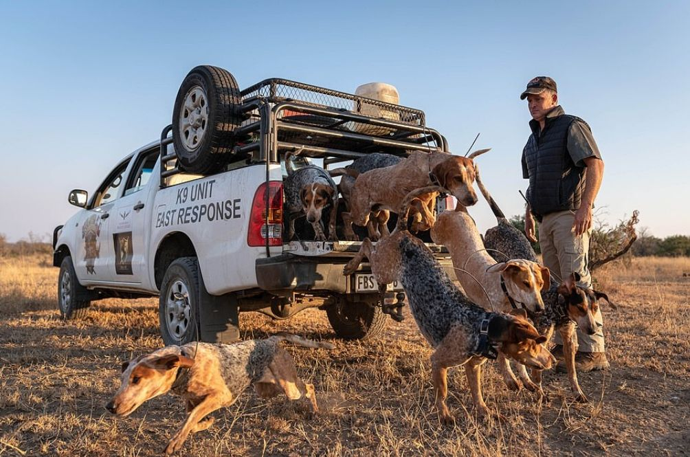 Dogs Trained To Protect Wildlife In South Africa Save 45 Rhinos And Other Animals From Poachers
