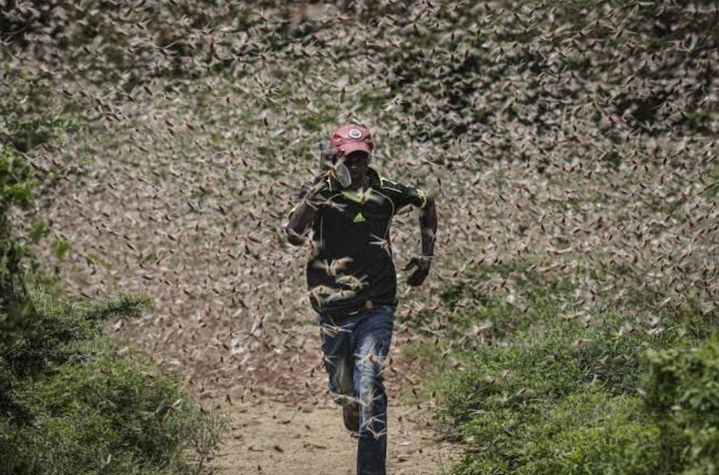Locust Swarms Force Somalia To Declare A National ...