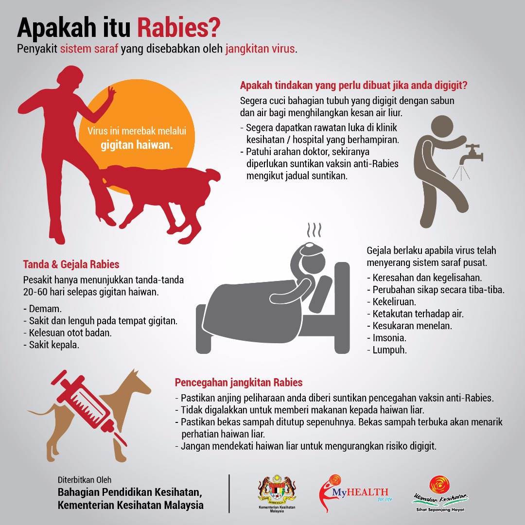 What Is Rabies And Why You Should Be Really Really Careful News