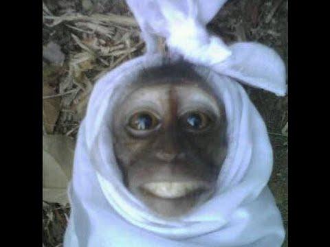 hantu-pocong-monyet