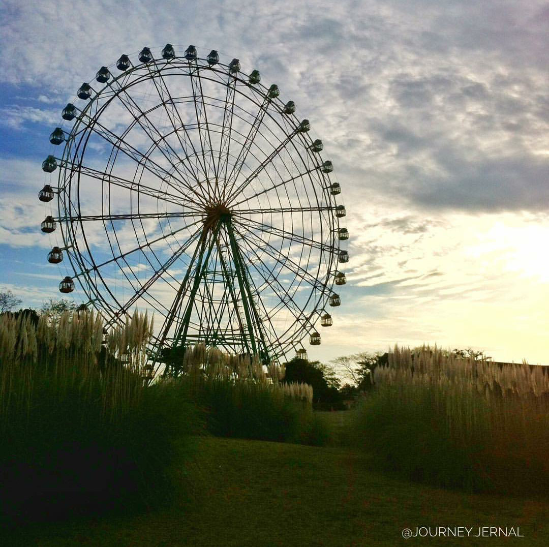 A georgeous wheel at Hitachi Seaside Park in Japan.