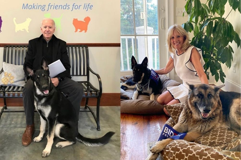 Major Win For US President-Elect Joe Biden's Rescue Dog