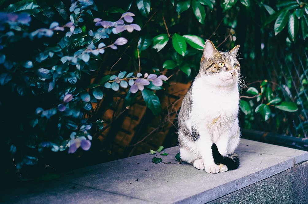 8 Plants That Are Absolutely Safe For Your Cats