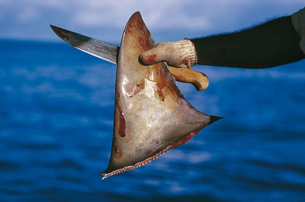 Malaysians Love Shark Fin So Much, We're The Second Biggest Importer In The World