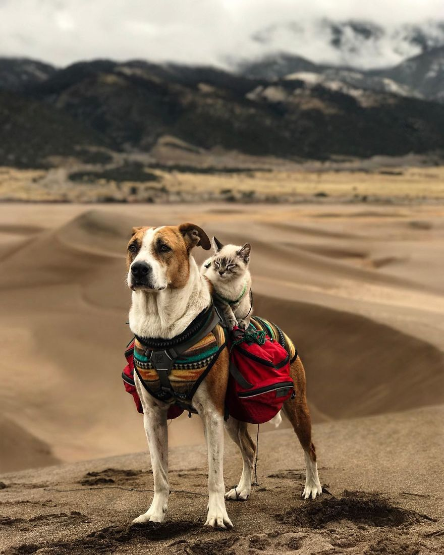 A Cat And A Dog Travelling The World Together Is The Cutest Thing Ever Lifestyle Rojak Daily