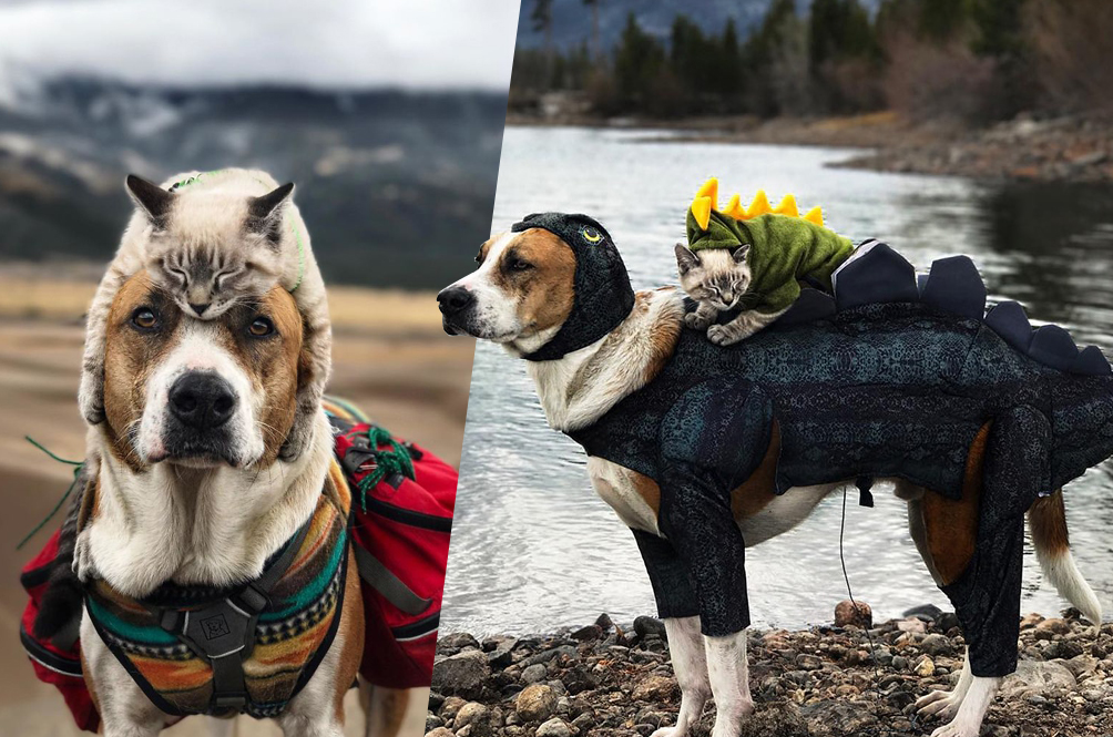 A Cat And A Dog Travelling The World Together Is The Cutest Thing Ever!