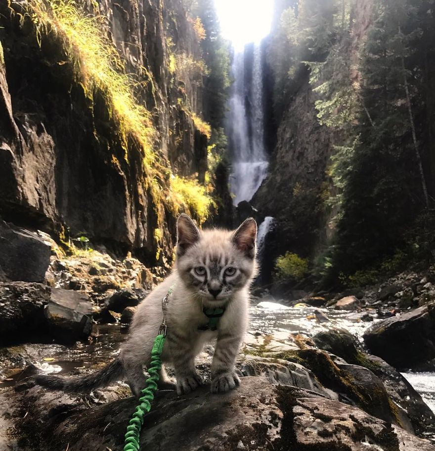 Why chase mice when you can chase waterfalls?