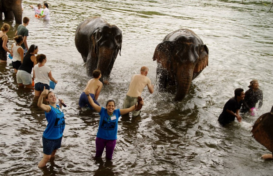 Volunteers having fun bathing elephants.
