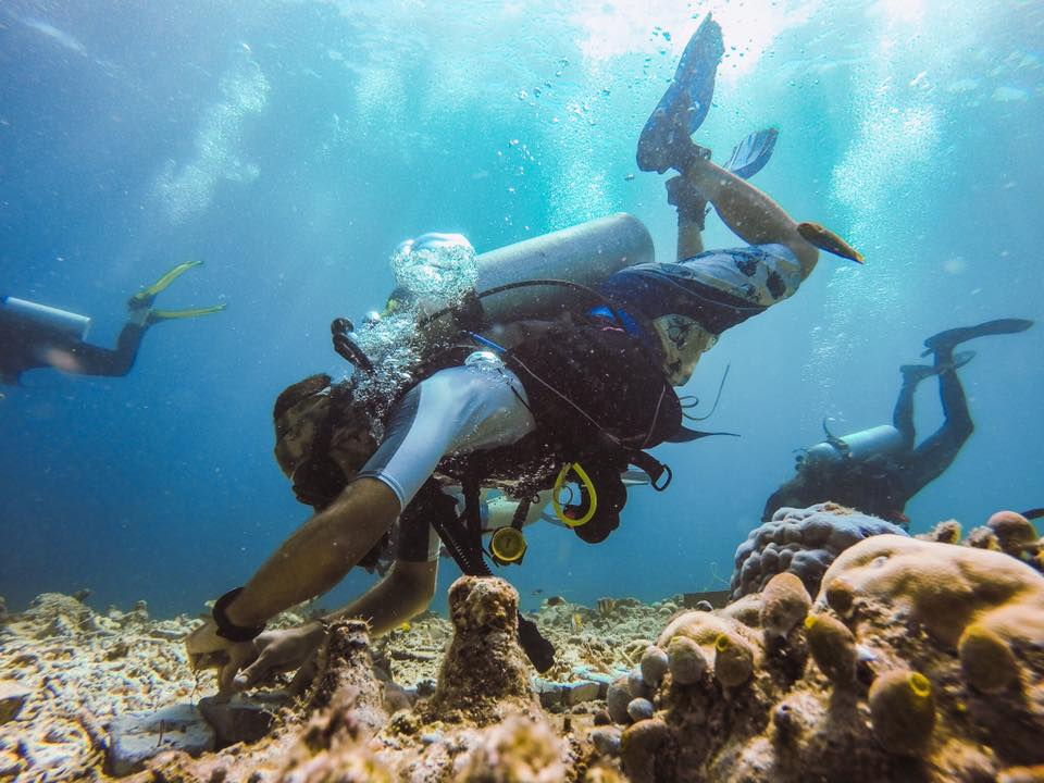 Planting coral on a reef is so much fun.