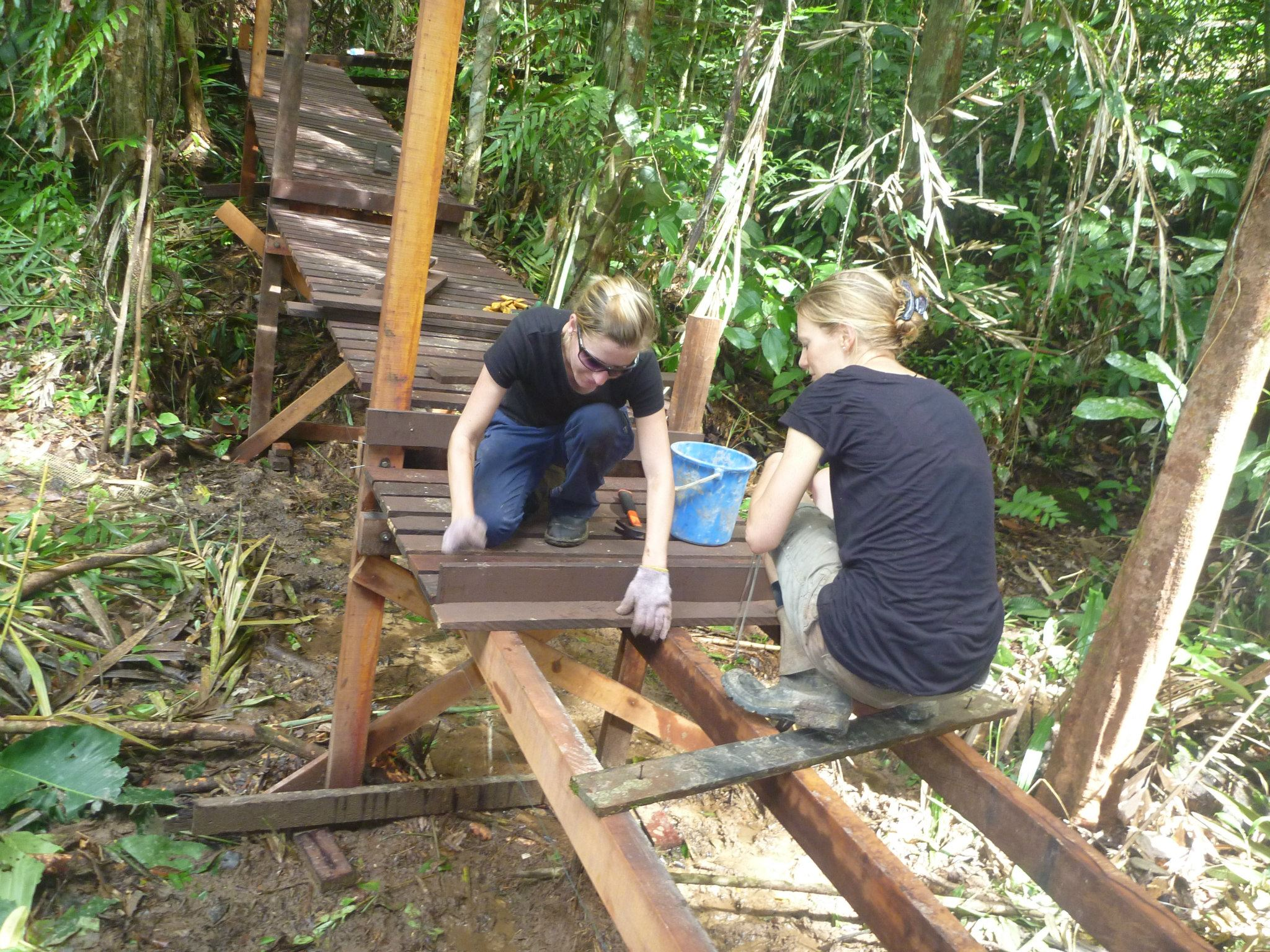 Volunteers building boardwalks
