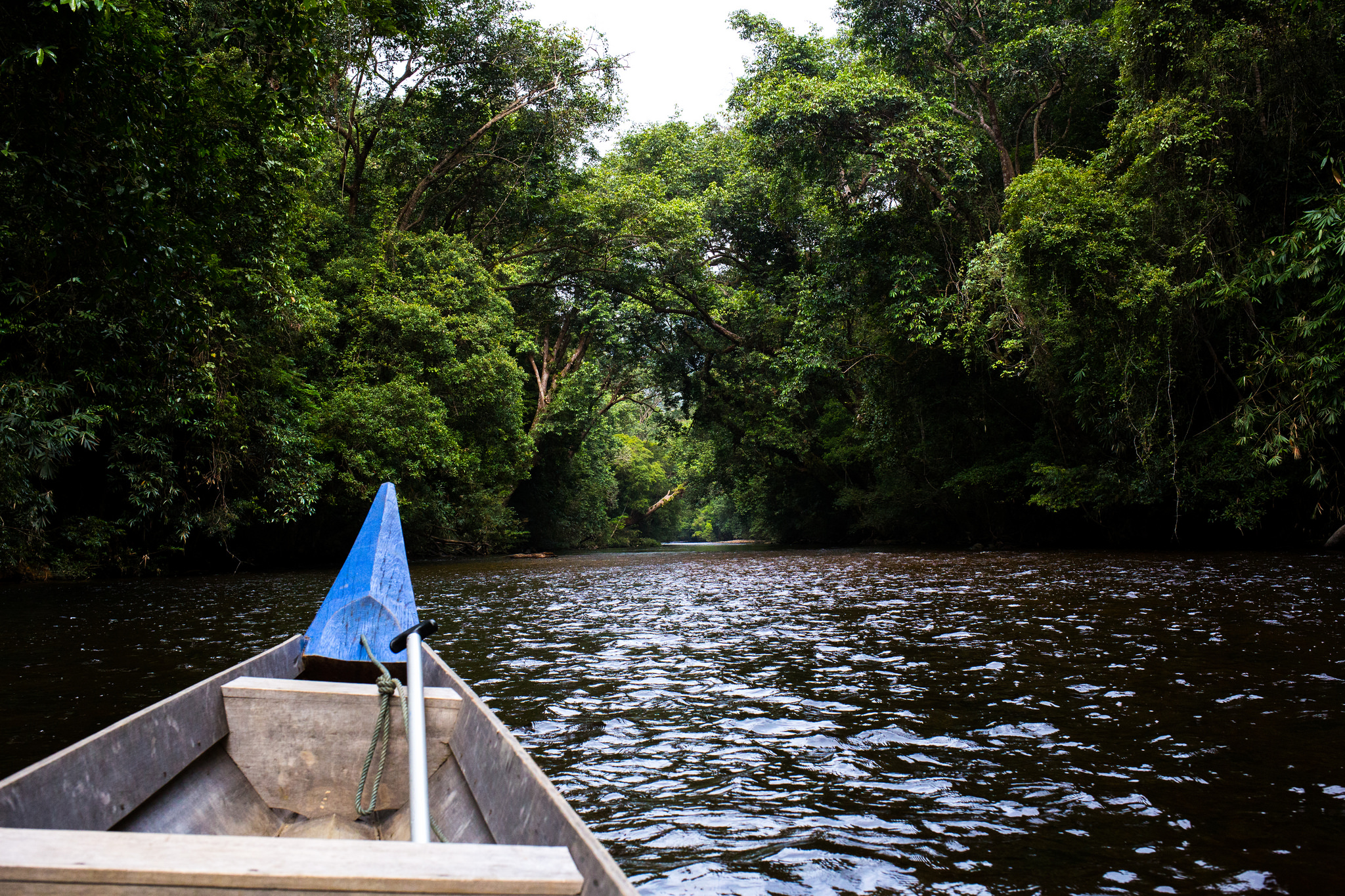 You'll need to hop onto a boat to reach Taman Negara.